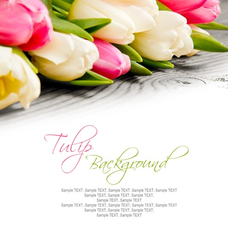Abstract background made of tulip blooms with white space for text Stock Photo
