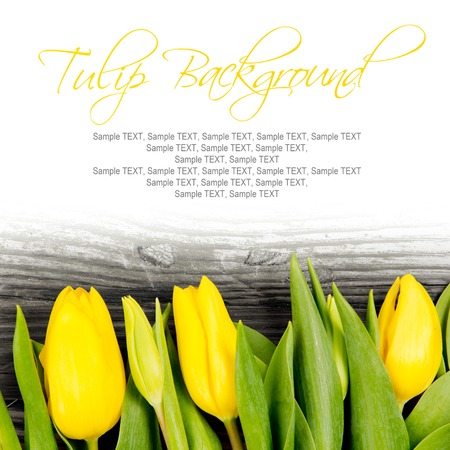 anniversary backgrounds: Abstract background made of tulip blooms with white space for text Stock Photo