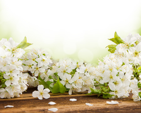 Blossoms on wooden desk with white space for text