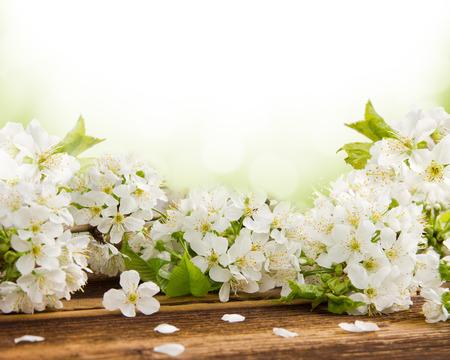 flor de cerezo: Flores en escritorio de madera con espacio en blanco para el texto