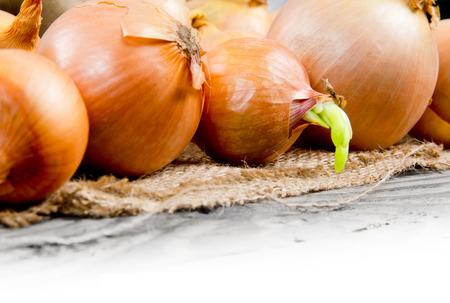raum weiss: Foto von Zwiebeln K�pfe auf Sackleinen mit Leerraum