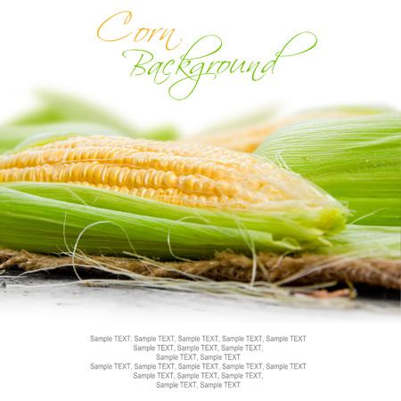 ear corn: Foto de la mazorca de ma�z con hojas y un espacio en blanco para el texto