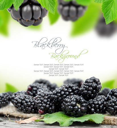 brambleberry: Photo of blackberries with leaves and white space for text