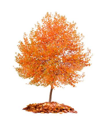Photo of tree with orange leaves isolated on white Standard-Bild