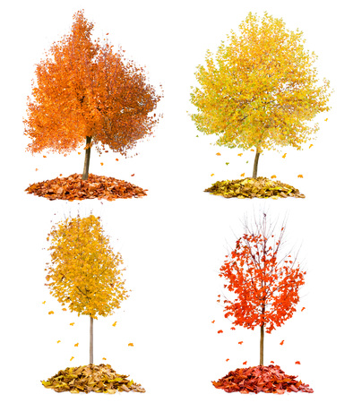 branches and leaves: Collection of trees with red and yellow leaves falling down isolated on white