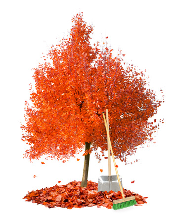 fall of the leaves: Photo of autumn tree with leaf heaps and cleaning tools isolated on white