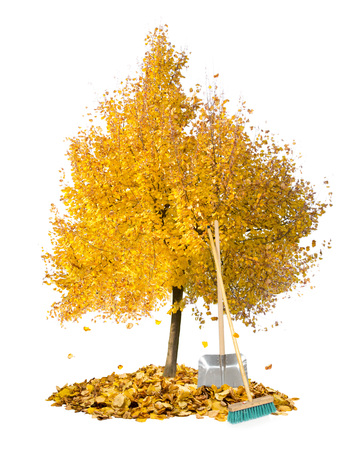fallen leaves: Photo of autumn tree with leaf heaps and cleaning tools isolated on white