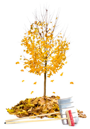 gold shovel: Photo of autumn tree with leaf heaps and cleaning tools isolated on white