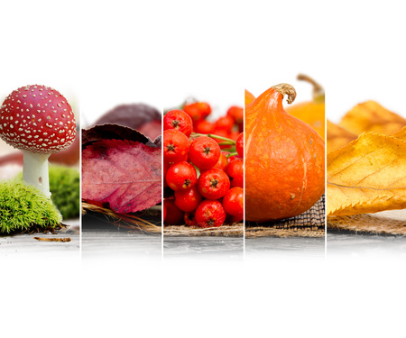 rowanberry: Photo of mix stripes in red, orange and yellow colors with various kinds of harvested vegetables and berries; autumn concept; white space for text