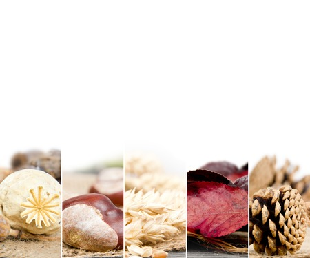 seeds of various: Photo of mix stripes in red and brown colors with various kinds of harvested seeds and leaves; autumn concept; white space for text