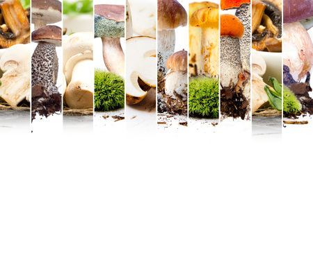 reticulatus: Photo of boletus, field mushroom and chanterelle mix stripes; edible mushroom concept; white space for text Stock Photo