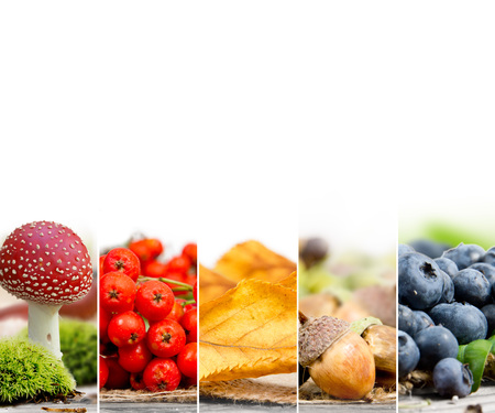 rowanberry: Photo of mix stripes in rainbow colors with various kinds of harvested vegetables, mushrooms and berries; autumn concept; white space for text