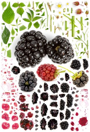 Large collection of blackberry fruit pieces, slices and leaves isolated on white background. Top view. Seamless abstract pattern.