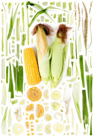 Large collection of corn vegetable pieces, slices and leaves isolated on white background. Top view. Seamless abstract pattern. Stock Photo