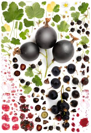 Large collection of black currant fruit pieces, slices and leaves isolated on white background. Top view. Seamless abstract pattern.