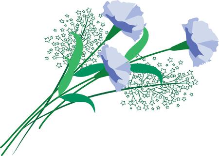 Purple carnation flower