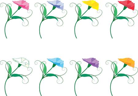 colorful carnation flower set Illustration
