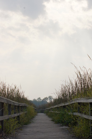 on both sides: Pathway with marsh on both sides  Stock Photo