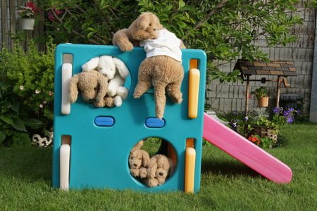 Stuffed dogs climbing on a playset, garden background. photo