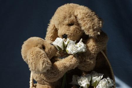Perros de peluche, la madre y el intercambio de niño flores. Foto de archivo - 38283937
