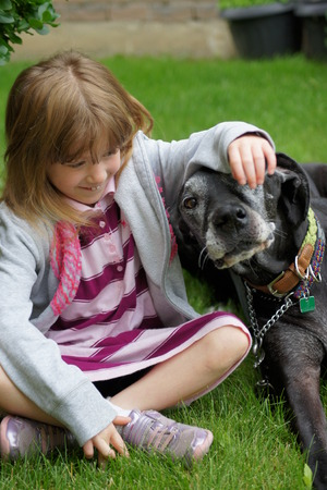 pure bred: Happy little girl with great dane.