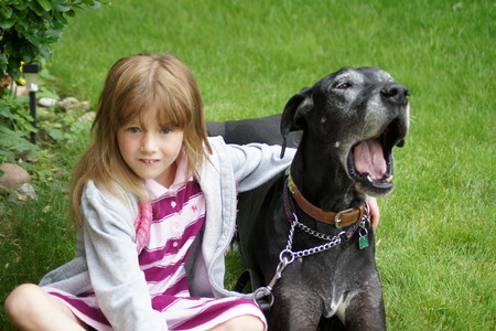 dane: Little girl with great dane. Stock Photo