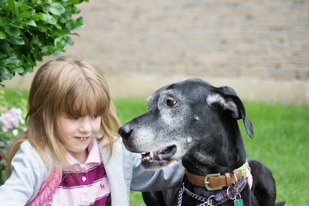 pure bred: Girl and great dane together. Stock Photo