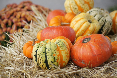 gourds: Colorful gourds resting on hay. Stock Photo