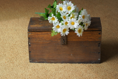 daisys: Daisys on antique wooden box.