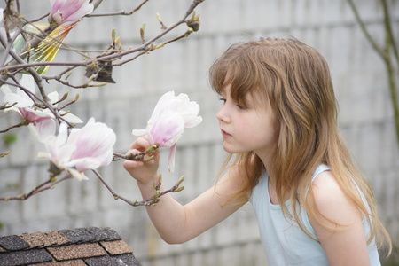 smelling: Pretty girl smelling a magnolia flower.
