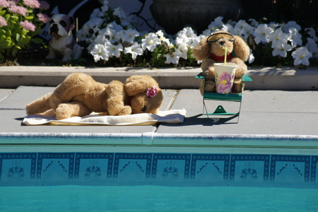 Stuffed dogs lounging by the pool on a summer day.