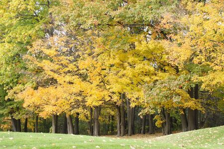 Gold and yellow shades of leaves on deciduous trees beautify the landscape on a fall day.