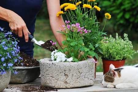 Gardener planting flowers in pot photo