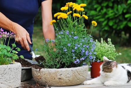 鍋に花を植える女性庭師
