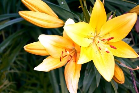 Gelbe Blumen auf gr�nem Hintergrund.