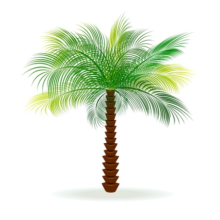 image of a palm tree on a white background.