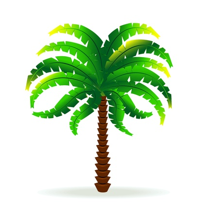 Image of a palm tree on a white background.   Stock Vector - 9925577
