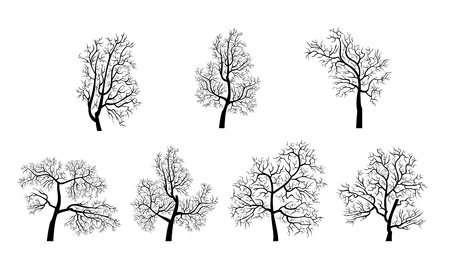 The silhouettes of the trees on a white bockgroud  Illustration