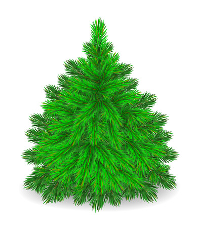 Fluffy green herringbone on a white background. Little spruce.