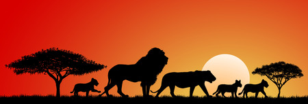 red sunset: Lions silhouettes at sunset and abstract landscape. Lions family.