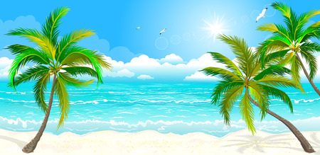 Landscape of the tropical shore. The landscape of the sea shore with palm trees. Sea shore with palm trees, sky and sun. Palm trees against the sky, the sea and the sun.