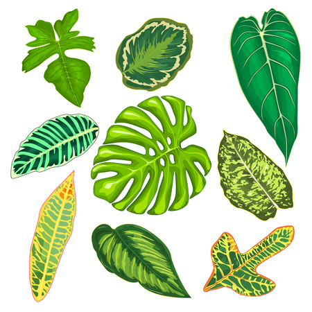 Leaves of tropical plants on a white background. Set of leaves of tropical plants.