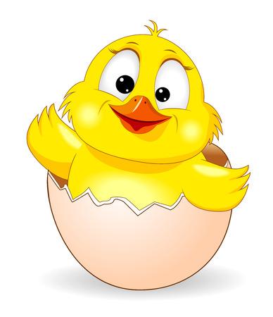 Pollo giallo su sfondo bianco. Pulcino del fumetto che dà una occhiata da un guscio d'uovo.