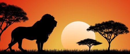 Silhouette of an African lion. Lion on the background of the sun and trees. African wild landscape. Sunset. Wildlife of Africa. 일러스트