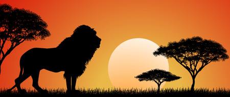 Siluetta di un leone africano. Leone sullo sfondo del sole e degli alberi. Paesaggio selvaggio africano. Tramonto. Fauna selvatica dell'Africa. Vettoriali