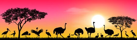 Wild birds of the African savannah against the sky and the sun. Silhouettes of different birds. Wildlife of Africa. 일러스트