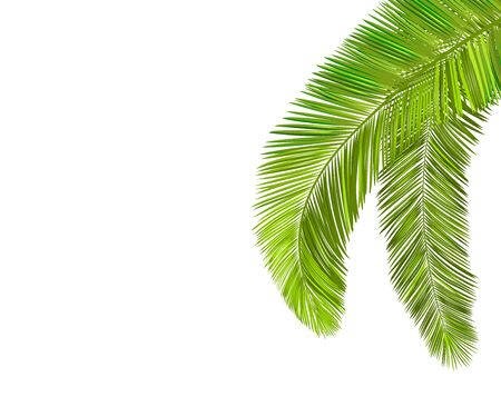 Palm branches with leaves on a white background.