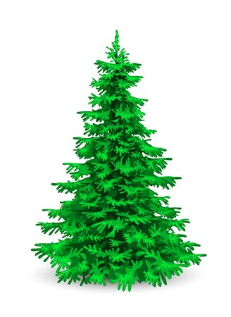 Christmas tree. Herringbone on a white background. Evergreen coniferous tree. 스톡 콘텐츠 - 149651763