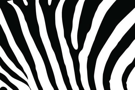 Zebra texture photo