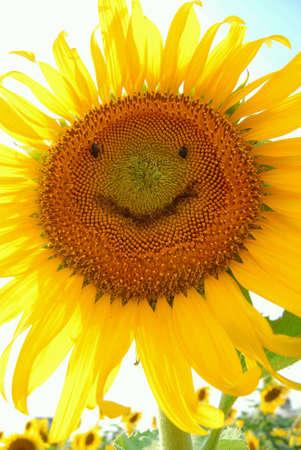 cara sonriente: Cara sonriente Girasol